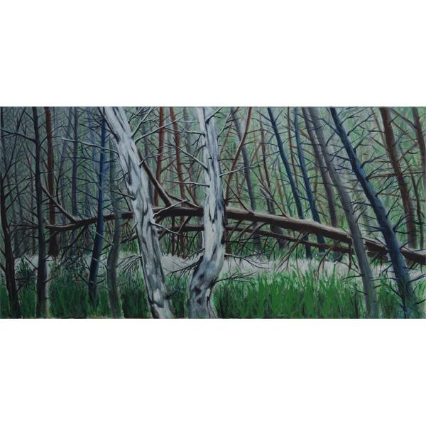 Blattlose Baumstämme mit Weg